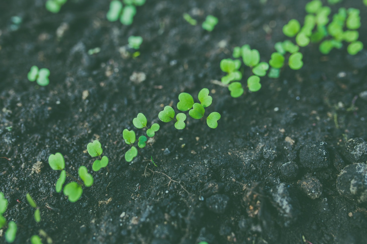 Case Study: Cultivating a Startup – From Seed to Harvest